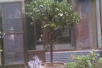 桔子树不发新芽怎么办,对症下药或修