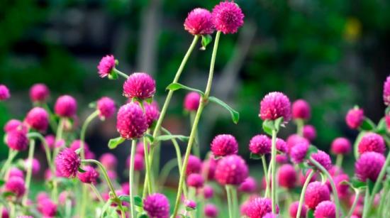 夏季适合养什么花:懒人养花必备