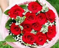 十一朵玫瑰花图片大全