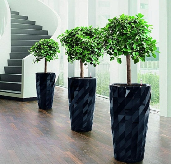 高花盆适合种什么花:适合栽种体型较大、比较好看的木本植物