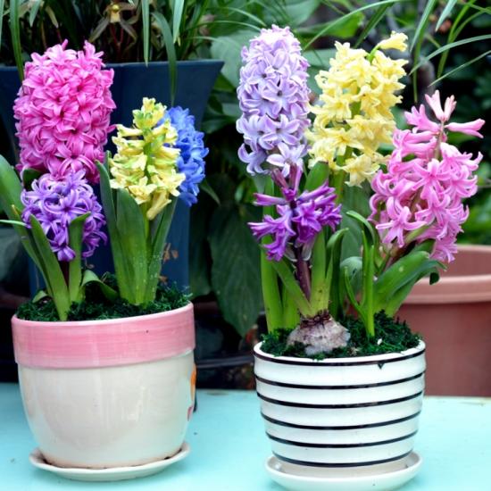 哪些花冬天也能开花:12种超耐寒花卉