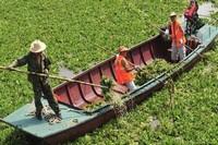 如何清除水葫芦,器械打捞效率最高