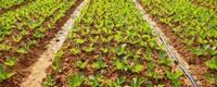 蔬菜施肥时间和方法