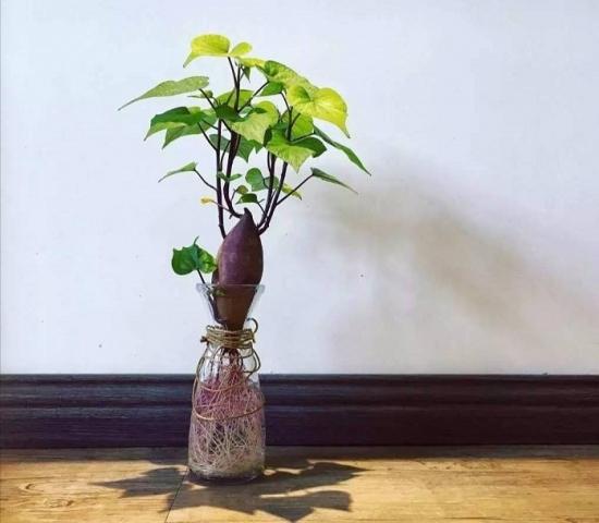 蔬菜做盆栽的方法