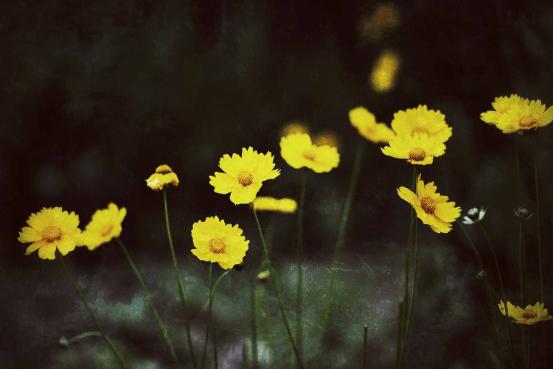 体积最小的花是什么?带你认识世界