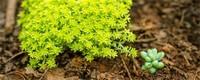 种多肉植物用什么土