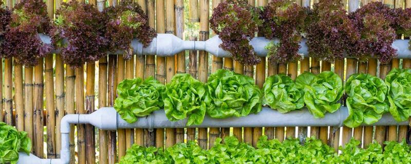 水培蔬菜一亩地的成本