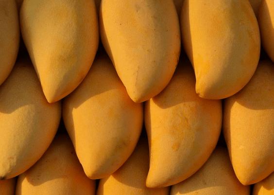 芒果能和鸡蛋一起吃吗?食用芒果的禁忌千万要注意!