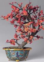 梅花盆栽图片