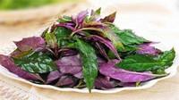 紫色叶子的菜,盘点十种营养价值高的蔬菜