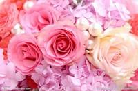 521朵玫瑰花图片大全