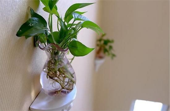 水培植物的方法:简单易学的10植物水