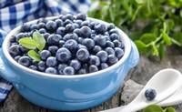 蓝莓不能和什么一起吃,吃蓝莓不宜吃海鲜/会过敏