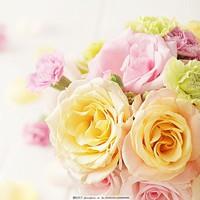 好看玫瑰花朵图片大全