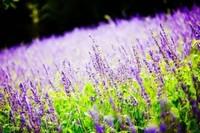 常见养花术语66例:水,培养土/介质,肥