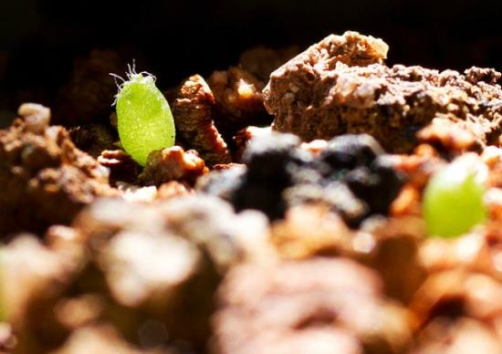 多肉植物播种的季节:大多在春季和秋