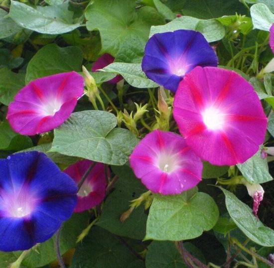 什么花的花期最长:10种超长花期的花