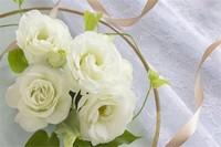 桔梗花不同颜色的花语,每一种桔梗花都代表不同的爱