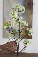 倩女梨花盆栽图片