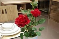 玫瑰种子几月份种植,3~4月最为适宜