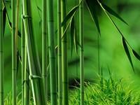 竹子的诗句,丰富且有韵味