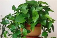 适合放在室内的植物有哪些
