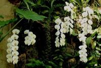 蝴蝶兰用什么土:常用7种疏松透气材