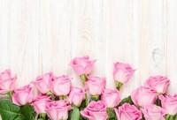 淡粉色的玫瑰花图片