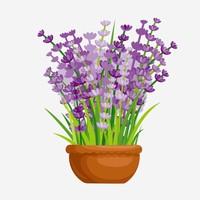 紫色的花盆栽图片