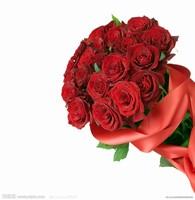 最新玫瑰花束图片大全