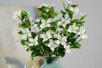 四照花的功效与作用,花如蝴蝶观赏性强/药用可提神醒脑