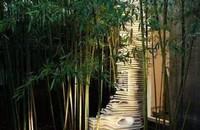 刚竹和早园竹区分,早园竹体型小/刚