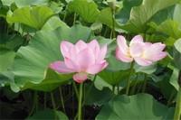 养花创业一般养什么花,详解十种致富花