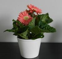 盆栽花卉图片