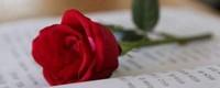 十一朵玫瑰的寓意