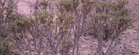 牡丹种植方法和时间