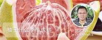柚子什么季节成熟