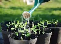 茶叶水发酵可以浇花吗,可以/可以增