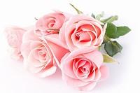 粉色玫瑰有什么意思,花语是什么?