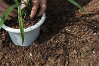 松树皮种兰花的配方,适合兰花生长的最佳4种配方