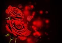 玫瑰花图片大全背景图