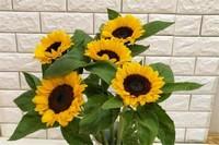 5朵向日葵花语是什么,含义无悔可送爱人