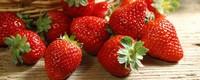 草莓叶子发黄