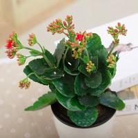 小盆栽花卉图片