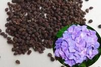 蝴蝶兰种子怎么发芽,清洗种子覆盖保