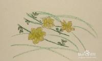 迎春花图片简笔画手绘