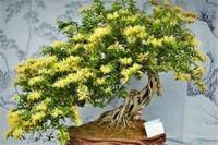 二花是什么花,金银花可以清热解毒
