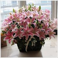 百合花图片花束