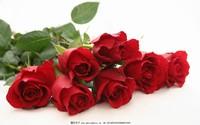 浪漫玫瑰花图片大全及