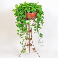 绿萝架子图片